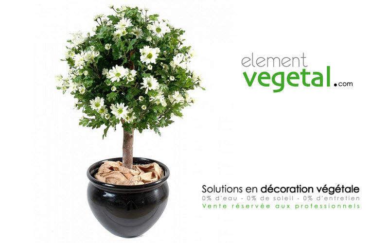 Element Vegetal Plante artificielle Arbres et plantes Fleurs et Senteurs  |