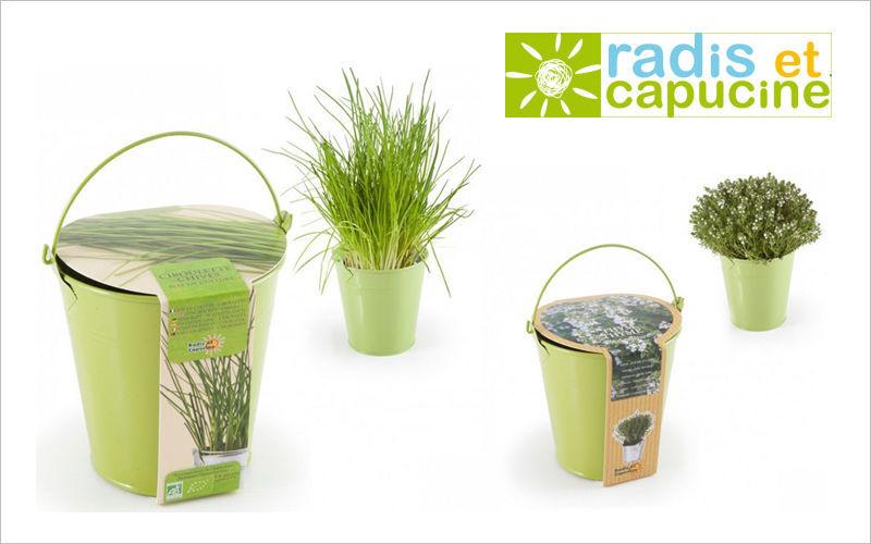 Radis Et Capucine Potager d'intérieur Arbres et plantes Fleurs et Senteurs  |