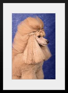 PHOTOBAY - le�on de style n�2 - Photographie