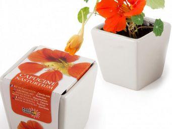 Radis Et Capucine - une touffe fleurie de capucine à faire pousser à l - Potager D'intérieur