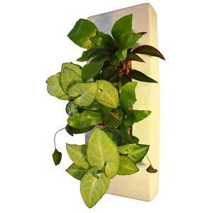 NATURALYS - bac � plantes - Vase � Fleurs