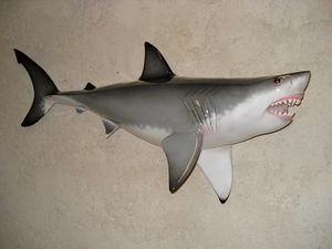 cap vert - grand requin blanc - Trophée De Pêche