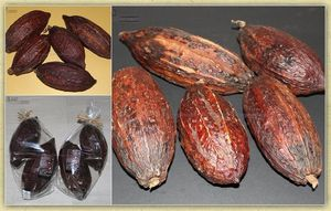 Black Image Natureworld - cacao - Fruit Séché