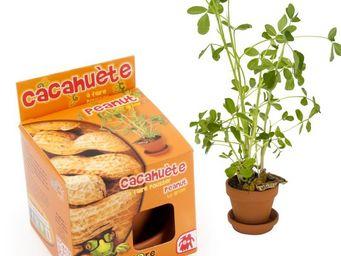 Radis Et Capucine - la découverte de l'étrange culture de la cacahuèt - Potager D'intérieur