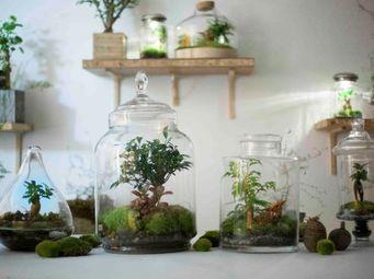 GREEN FACTORY -  - Terrarium Jardin Sous Cloche