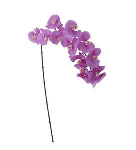 Pomax - orchidée - Fleur Artificielle