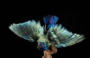 MASAI GALLERY - taxidermie - Oiseau