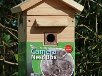 Wildlife world - colour camera nest box - Oiseau