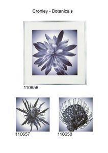 Artefact - cronley - botanicals - Photographie