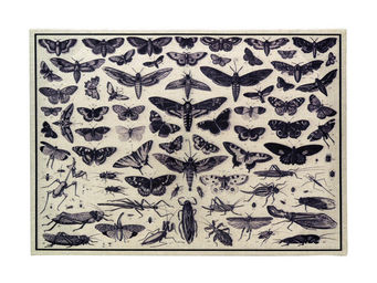 Interior's - tableau en lin iris - Tableau Décoratif