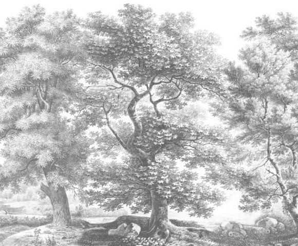 Ananbô - Papier peint panoramique-Ananbô-Sous-bois Monochrome gris