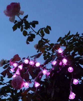 FEERIE SOLAIRE - Guirlande lumineuse-FEERIE SOLAIRE-Guirlande solaire roses 20 leds rose 3m80