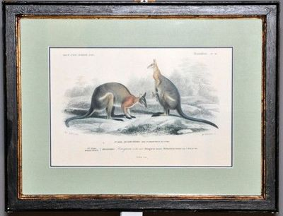 Demeure et Jardin - Gravure-Demeure et Jardin-Gravure couple de Kangourous