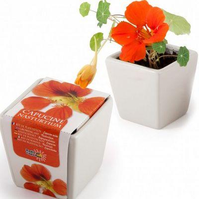 Radis Et Capucine - Potager d'int�rieur-Radis Et Capucine-Une touffe fleurie de capucine � faire pousser � l