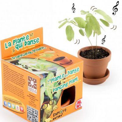 Radis Et Capucine - Potager d'int�rieur-Radis Et Capucine-L'incroyable plante qui danse � faire pousser
