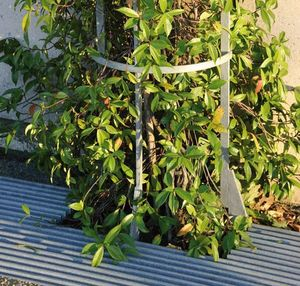 Area -  - Tree Protector