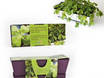 Radis Et Capucine - jardinière du bonheur trèfle à 4 feuilles - Interior Garden