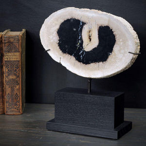 Objet de Curiosite - tranche de palmier fossile 4 kg - Fossil