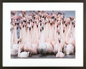 ABLO BLOMMAERT -  - Photography