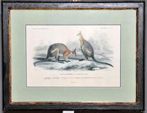 Demeure et Jardin - gravure couple de kangourous - Engraving