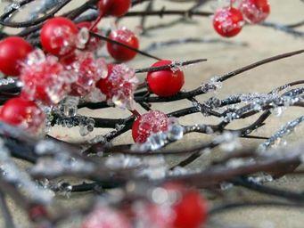 Graine de Nature -  - Branch Arrangement