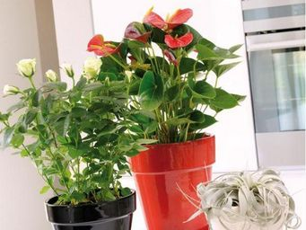 DEROMA France - -glacis - Plant Pot Cover