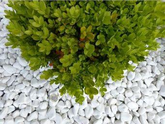 CLASSGARDEN - galet blanc pure pack de 5 m² calibre 12-24 mm - Pebble Flooring