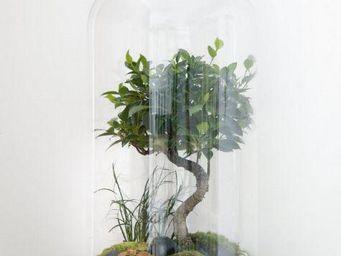 GREEN FACTORY - giant lab   bonsaï (8 ans) - Terrarium Garden Under Glass