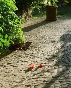 Pierra -  - Outdoor Paving Stone
