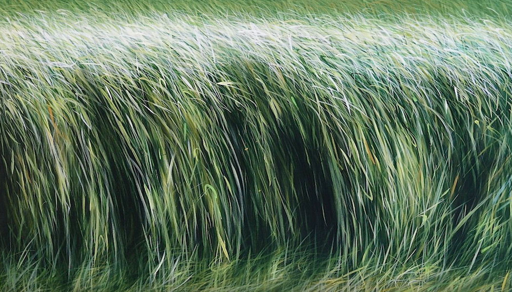 MANUEL CANCEL Zeitgenössische Gemälde Malerei Kunst  |