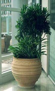 Indoor Garden Design - abn amro - Natürliche Zimmerpflanze