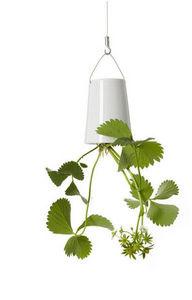 BOSKKE -  - Blumenkasten Zum Aufhängen