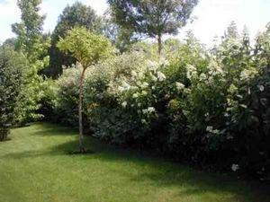 Berthier Paysagiste -  - Landschaftsgarten