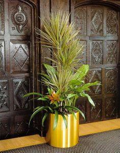 Plantlife -  - Natürliche Zimmerpflanze