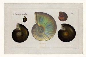Beaume Collection -  - Digital Werk