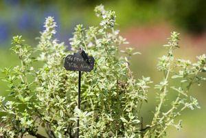 Botanique Editions - le lude - Gartenschild