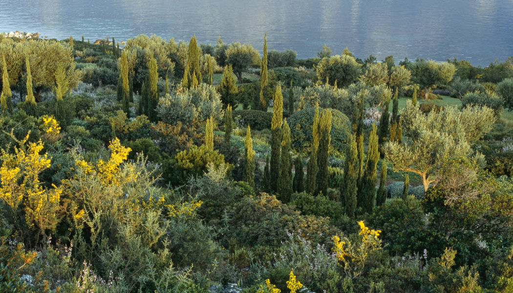 Camille Muller Jardín paisajístico Creación de jardines Jardín Diverso  |