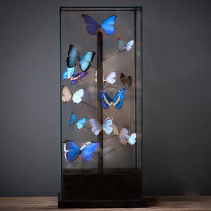 Objet de Curiosite -  - Mariposa