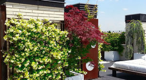 Jardinesysol -  - Terraza Acondicionada