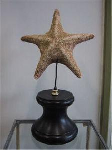 Objet de Curiosite - etoile de mer - Estrella De Mar