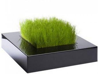 Atylia - carré de verdure chlorophylle noir - Riquadro Di Verde