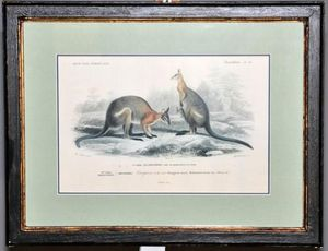 Demeure et Jardin - gravure couple de kangourous - Incisione