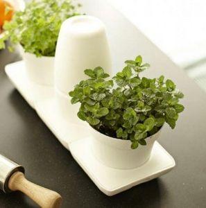 MINIGARDEN -  - Giardino Per Interni