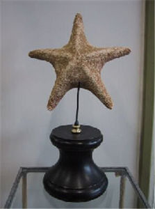 Objet de Curiosite - etoile de mer - Stella Di Mare